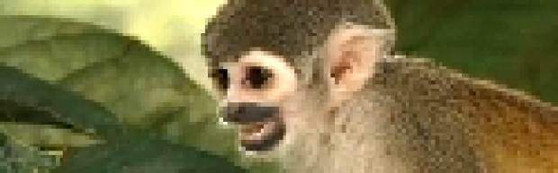 Monkeyzbox