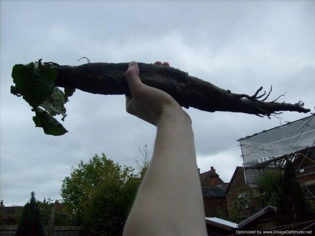 root-triumph