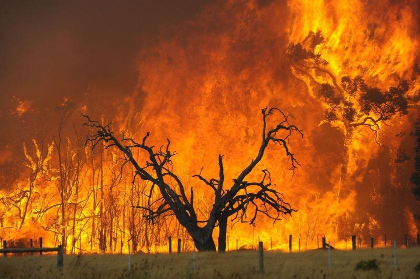 victorian-bushfire-inferno-pictures-kingslake-disa1