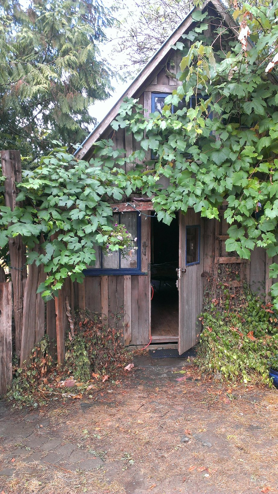 rsz_the_old_cabin