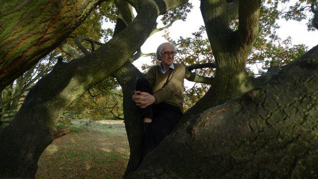 Hampstead Oak Nov 2010 - taken by Henrik Dahle