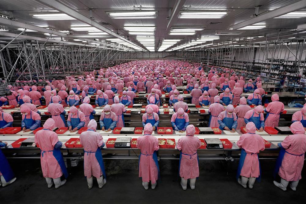 Edward Burtinsky: Deda Chicken Processing Plant, Dehui City, Jilin Province, China (2005)