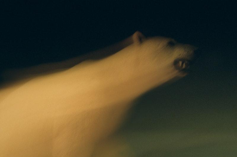 563_mawooshen-bear