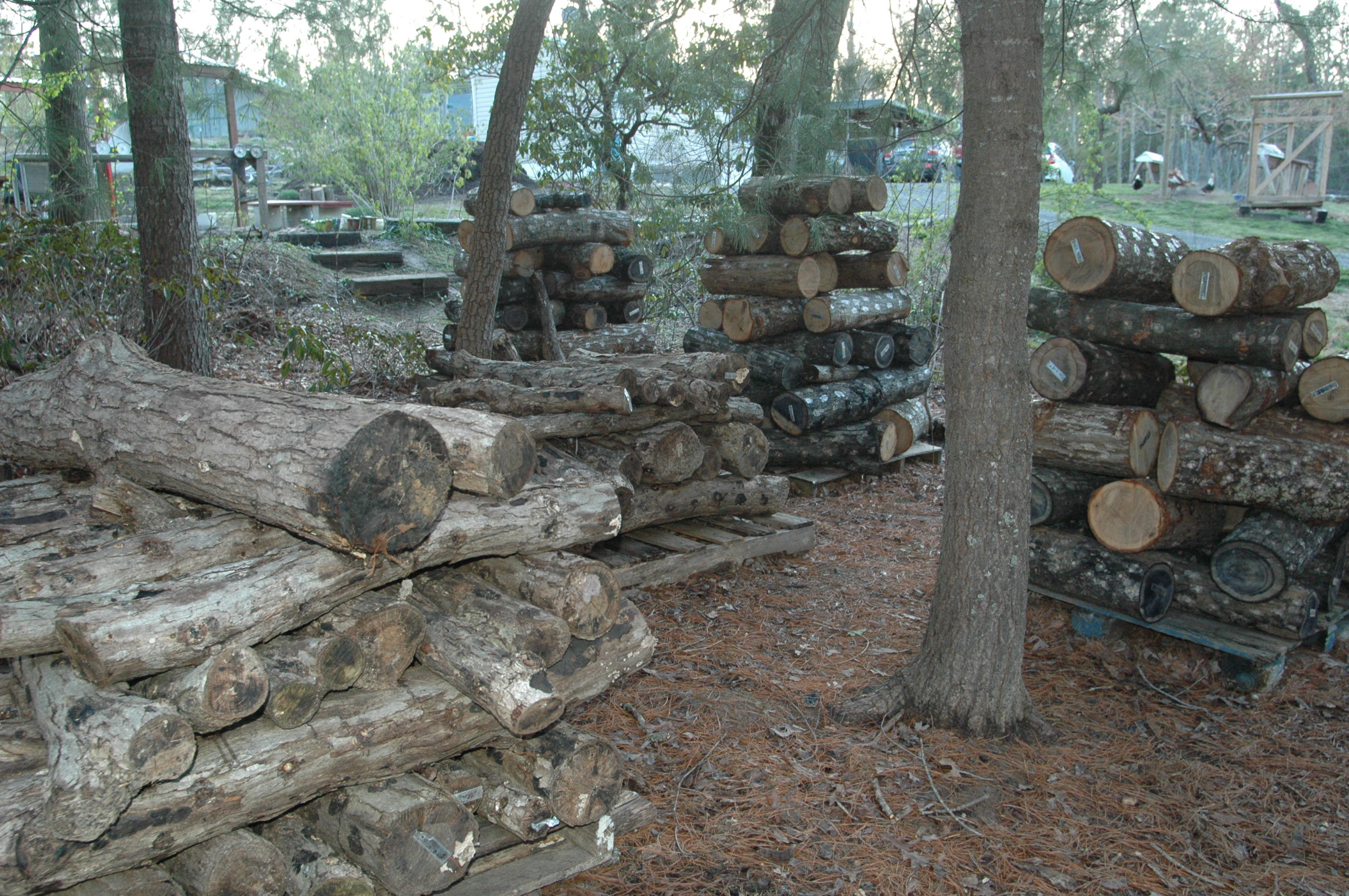 Stacked_Logs
